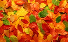 природа, листья, макро осень, фото, обои с природой