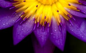 fiori piante, natura, foto, Sfondi