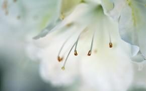 fiore, Macro