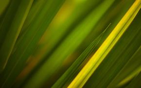 текстуры, трава, зелёный