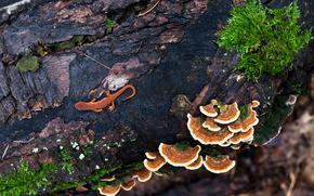 ящерица, дерево, грибы