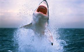 акулы, акула, зубы, опасность, море, вода, океан, волны, брызги, фото, обои с животными, животные