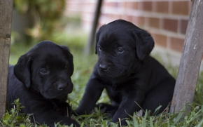 щенки, черненькие, малыши, двор