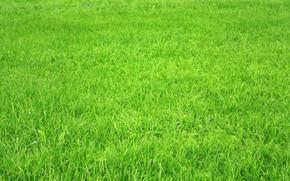природа, макро, трава, текстуры, обои, фото
