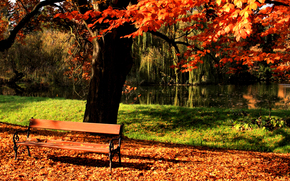осень, парк, лавочка, дерево, пруд