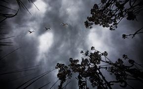 птицы, ночь, небо, фото, пейзажи, природа, дерево, ветки