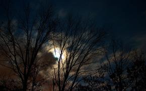 木, 夜, 月