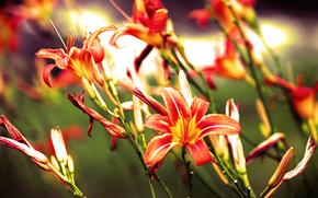 Flores, fotografas en primer plano, belleza, Naturaleza