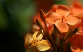 fiori, foto, Macro, Petali, natura