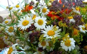 Macro, Daisies, bouquet, Flowers