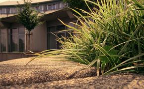 grass, home, asphalt, Wallpaper
