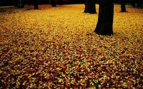 秋, カーペット, 葉