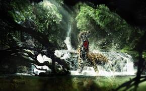 мартышка, гипард, джунгли