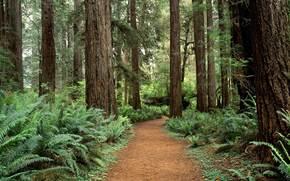 foresta, alberi