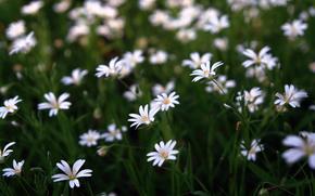 Flores, close-up fotos, natureza, beleza, Wallpapers