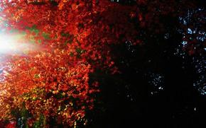 葉, 光, 闇