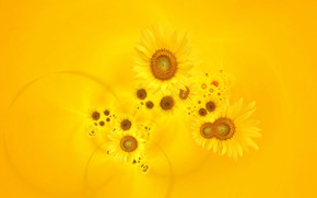 подсонухи, цветы, желтый фон