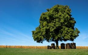 обои, природа, деревья, поле, трава, брёвна, доски