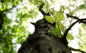 природа, дерево, макро, ветки, листья