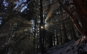 foresta, natura, inverno, neve, sole, alberi, luce, raggi, foto, carta da parati