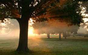autunno, alberi, foresta, fogliame, erba, sole, luce, raggi