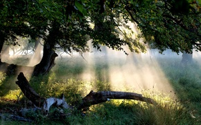 arbre, feuillage, herbe, fort, rayons, lumire, soleil, paysage