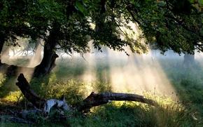 ツリー, 葉, 草, 森, 日光, 光, 太陽, 風景