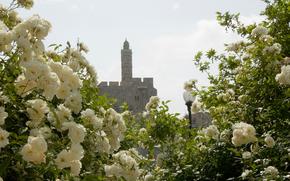 иерусалим, башня, фонарь, цветы, белые, розы, красота