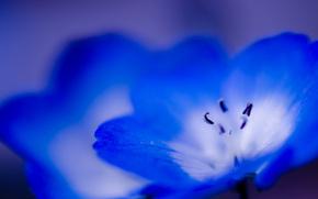 花, マクロ, 青, 青