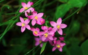 Fleurs, Macro, photo, Nature, fort, parc, Ptales