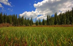 foresta, campo, erba, cielo