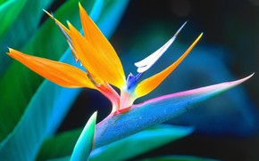 kwiat, Macro