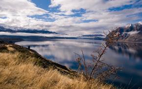 景观, 照片, 看, 性质, 水, 草, 山, 新西兰