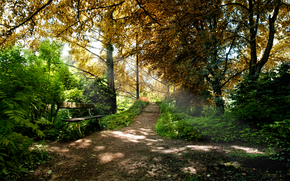 Nature, parc, fort, arbres, banc, Bancs, magasins, sige, beau fond d'cran, feuillage
