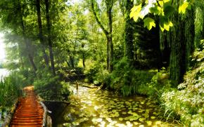 природа, деревья, мосты, растения, фото, обои, вода