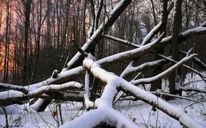 снег, дерево, лес