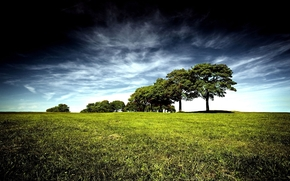 природа, пейзаж, растения, деревья, зелень. небо, яркие, цвета, обработка