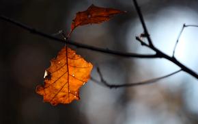 литья, ветка, осень