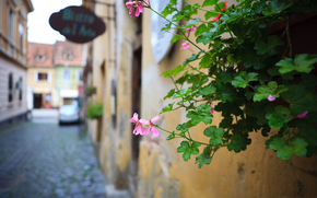 flor, deja, planta, Ciudad, calle, casa