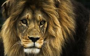 leone, re di bestie