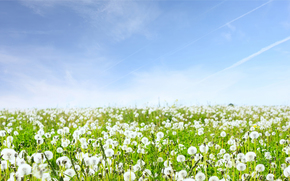 Landscapes, field, Flowers, nature, grass, sky