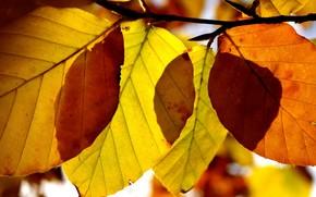 autunno carta da parati, autunno, fogliame, Macro