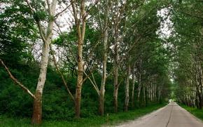 деревья, дорога, зелень