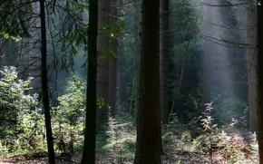 лес, тёмный, зелень