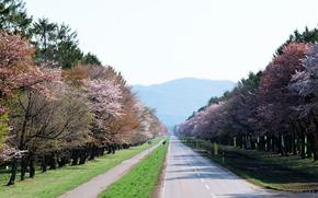 road, signs, Japan, Trees, sakura, spring