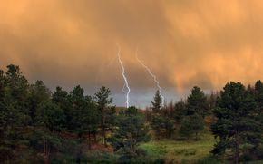 forest, Thunderstorm, lightning