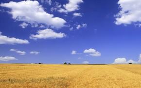 campo, cielo, nuvole