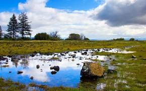cielo, Lago, natura, erba