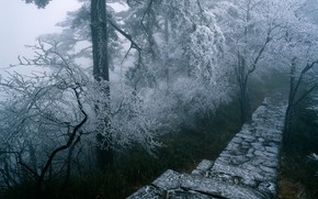 route, chelle, hiver