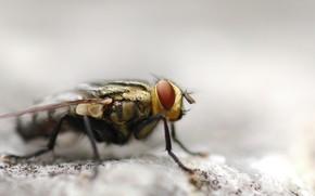 муха, макросъемка